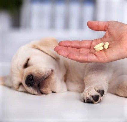 dogs with epilepsy