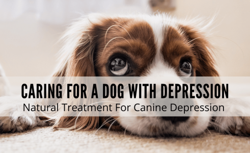 Dog With Depression – Caring For Dog With Depression