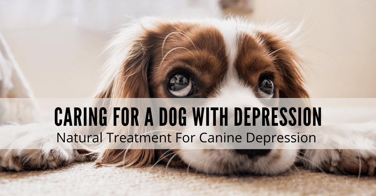 dogs with depression