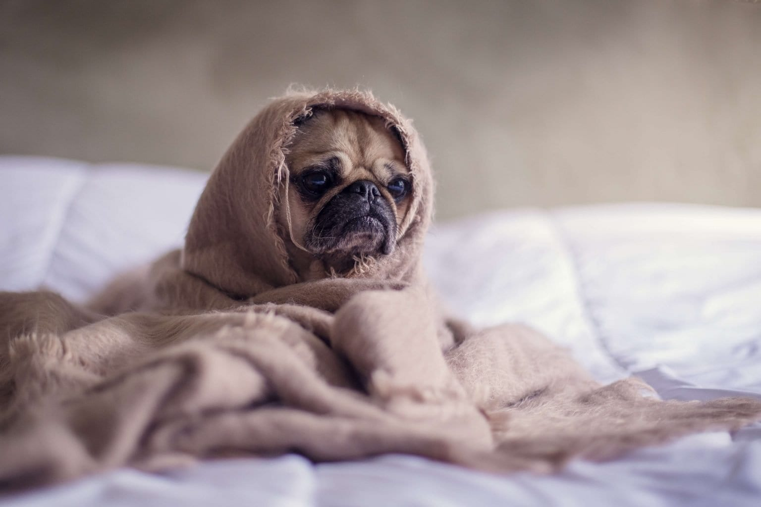 Dog depression symptoms