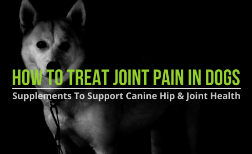 How To Treat Joint Pain In Dogs – Supplements For Dog Joints
