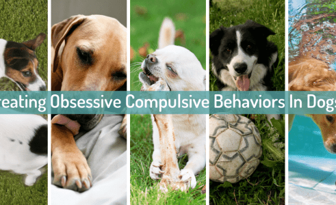 OCD In Dogs – Obsessive Compulsive Disorder Dog Behavior