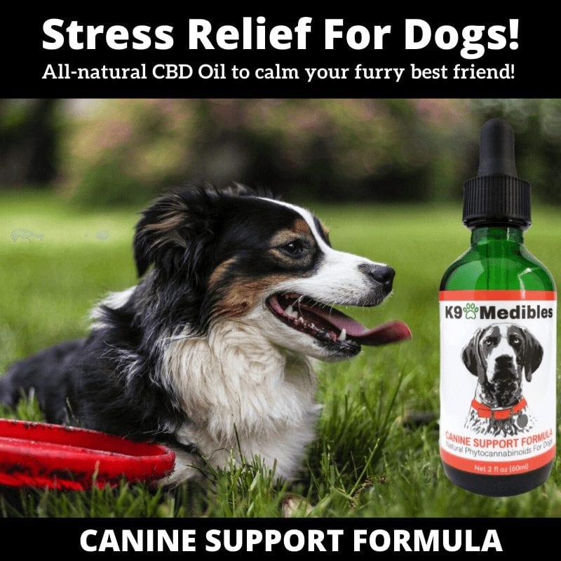 OCD in dogs treatment