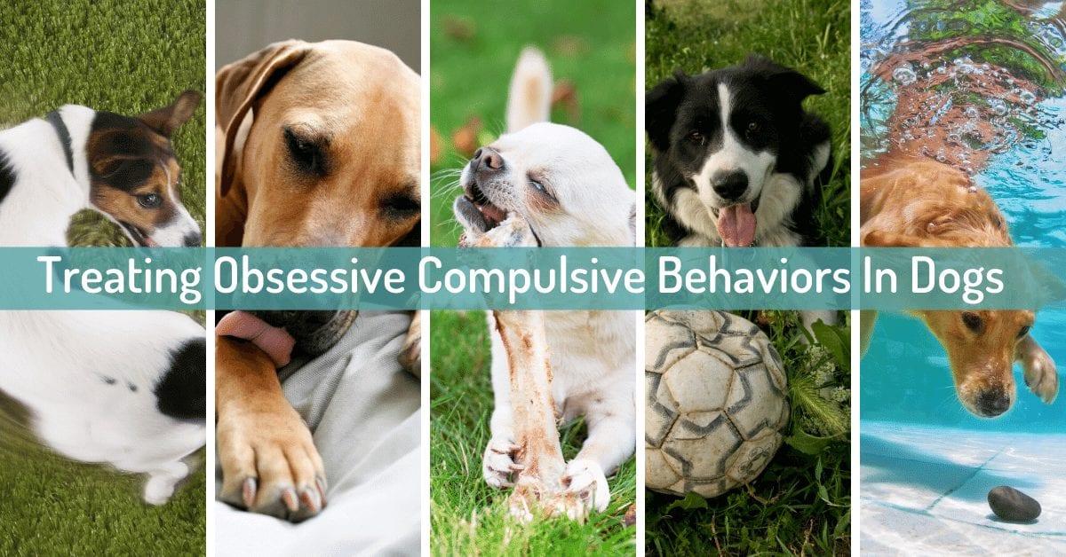 OCD in dogs