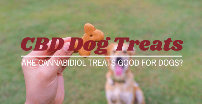cannabidiol treats for dogs