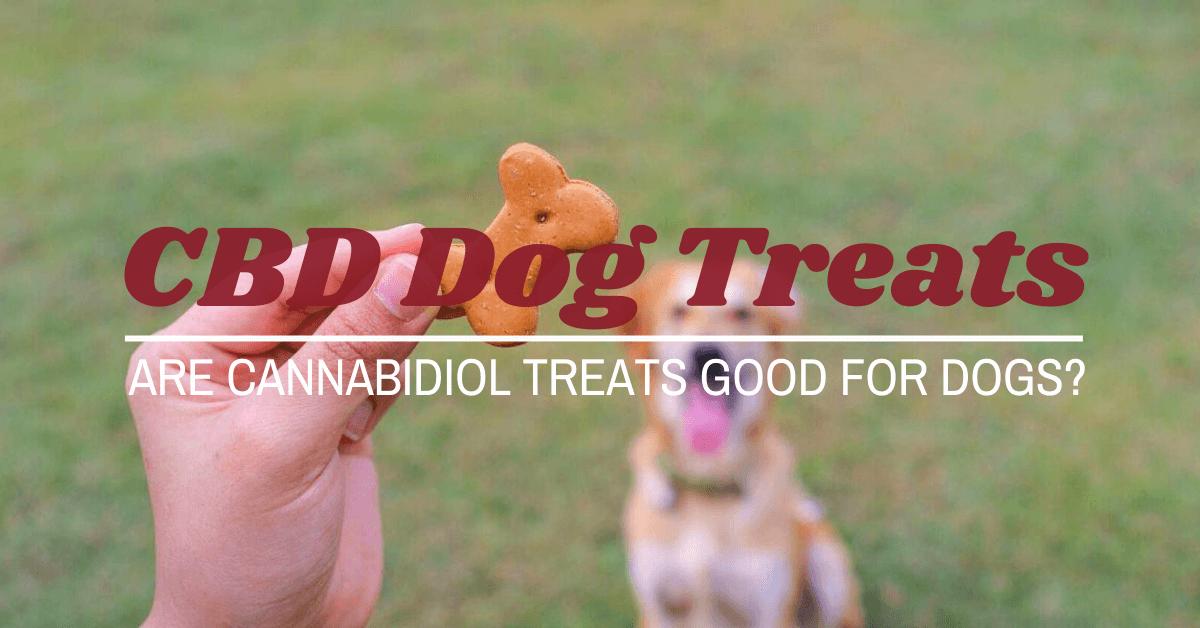 cannabidiol treats for dogs