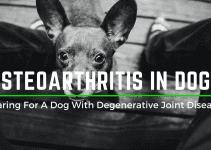 osteoarthritis for dogs