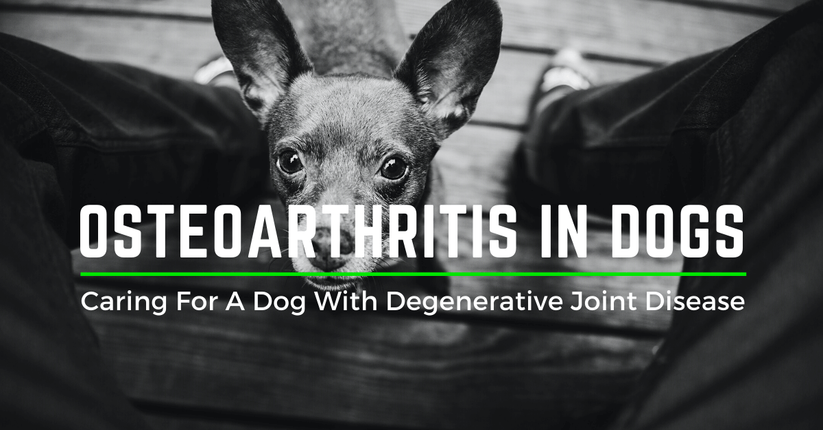 osteoarthritis for dogs