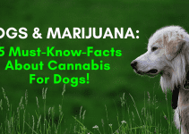 marijuana dogs