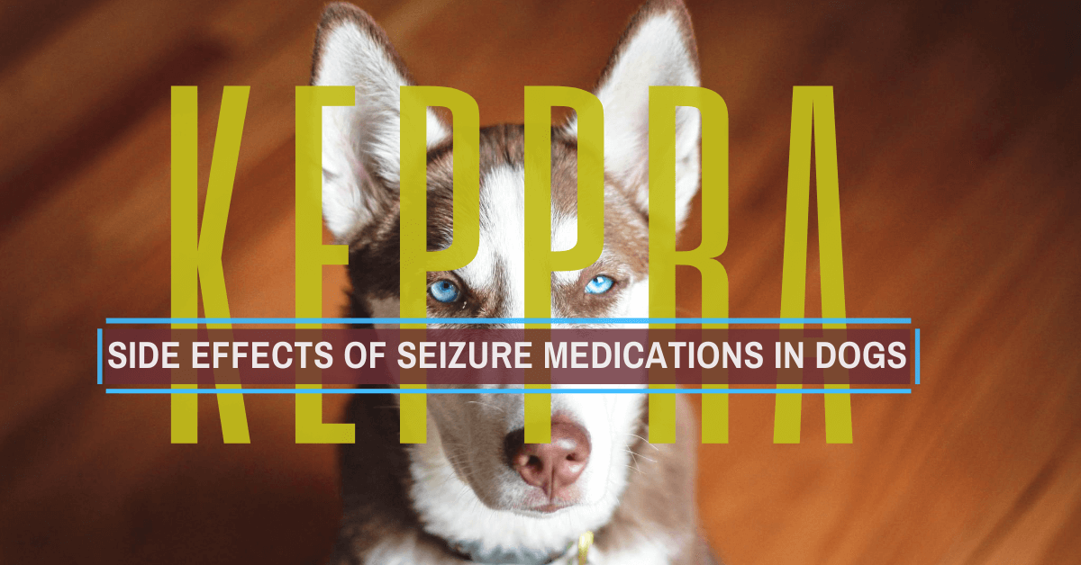 Keppra for dogs Side effects
