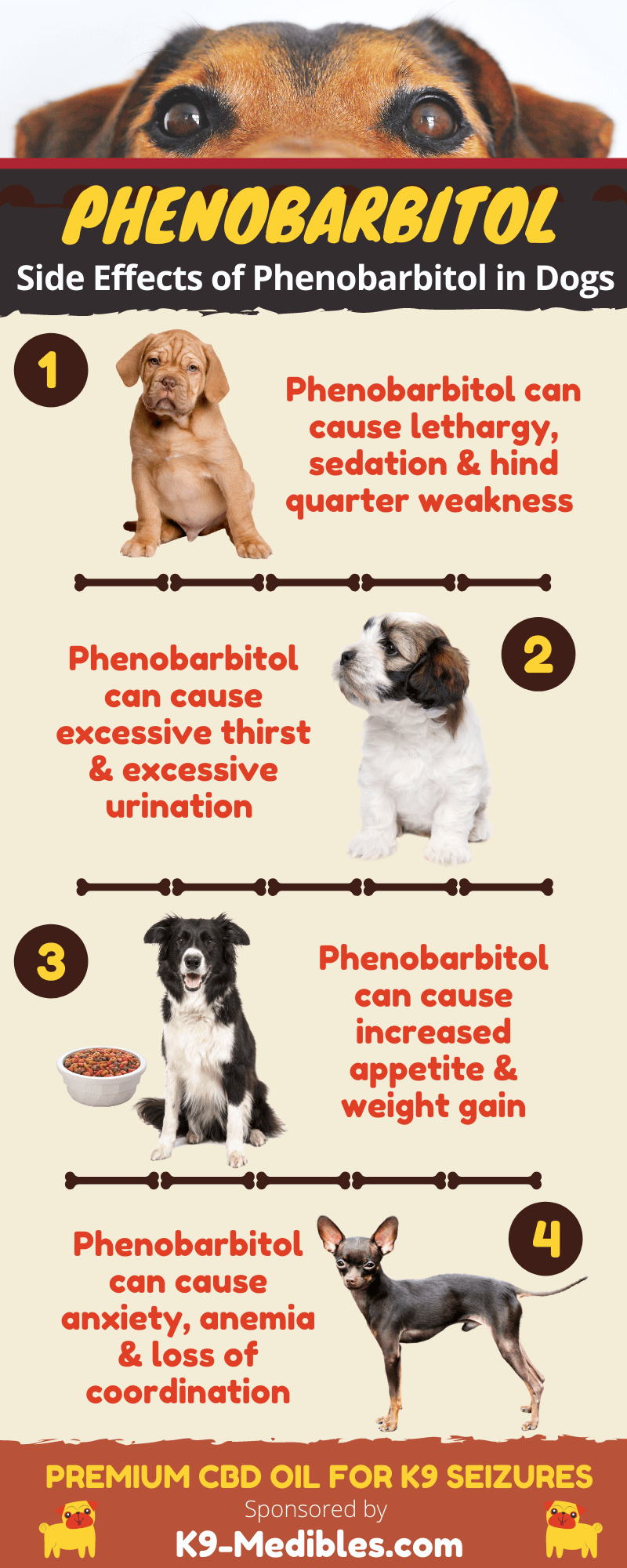 Phenobarbitol for dogs [INFOGRAPHIC] Side effects of phenobarbitol in dogs.