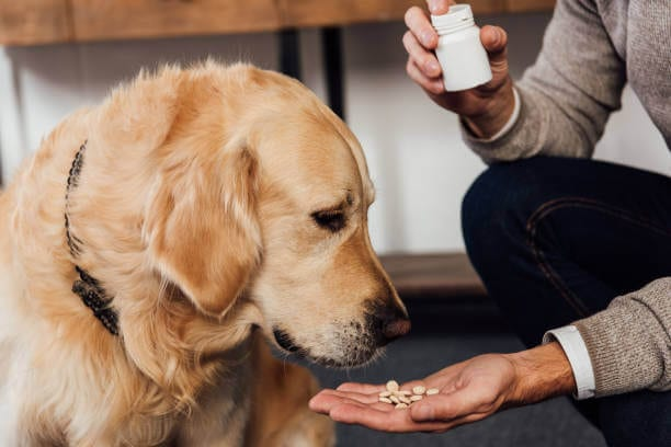 Phenobarbitol for dogs overdose