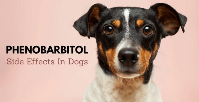 Phenobarbitol for dogs side effects