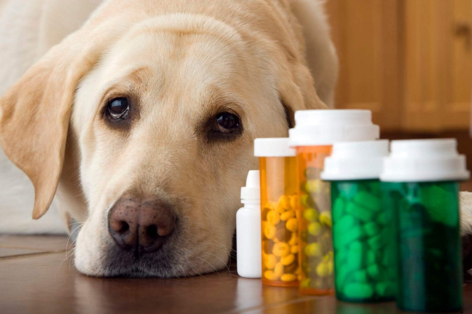 side effects of phenobarbitol in dogs