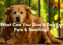 What can you give a dog for pain and swelling