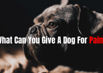 what can you give a dog for pain?