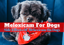 Meloxicam for dogs