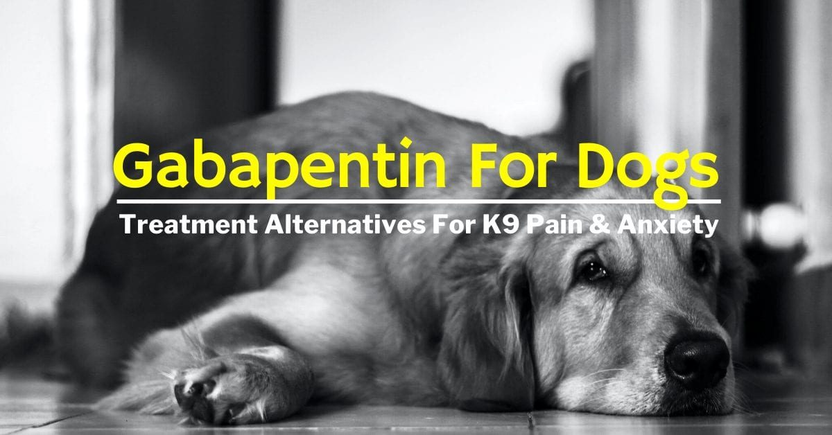 gabapentin for dogs side effects
