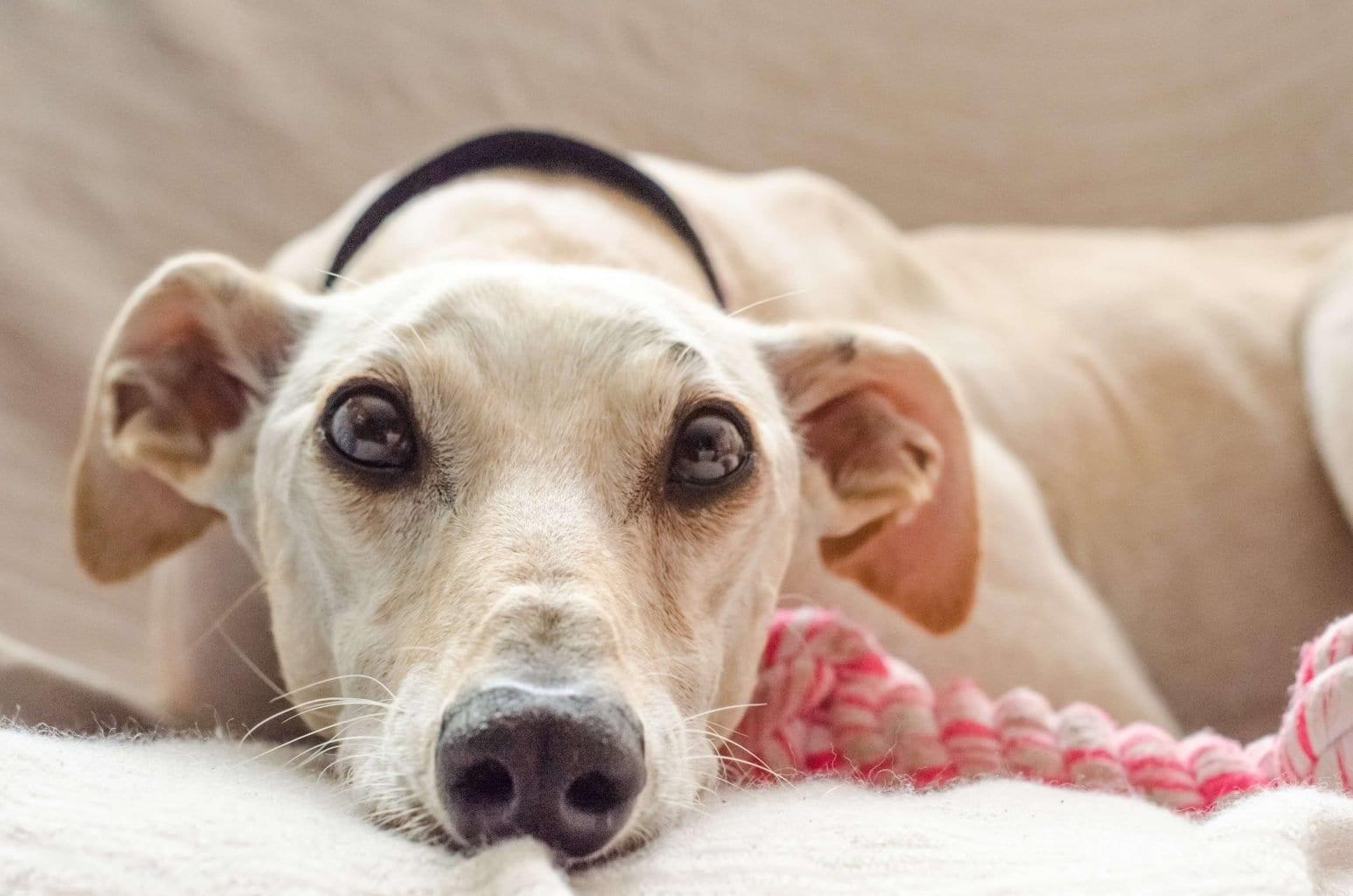 Side effects of Gabapentin in dogs