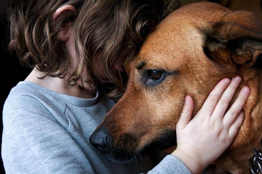 cbd oil for dogs pain