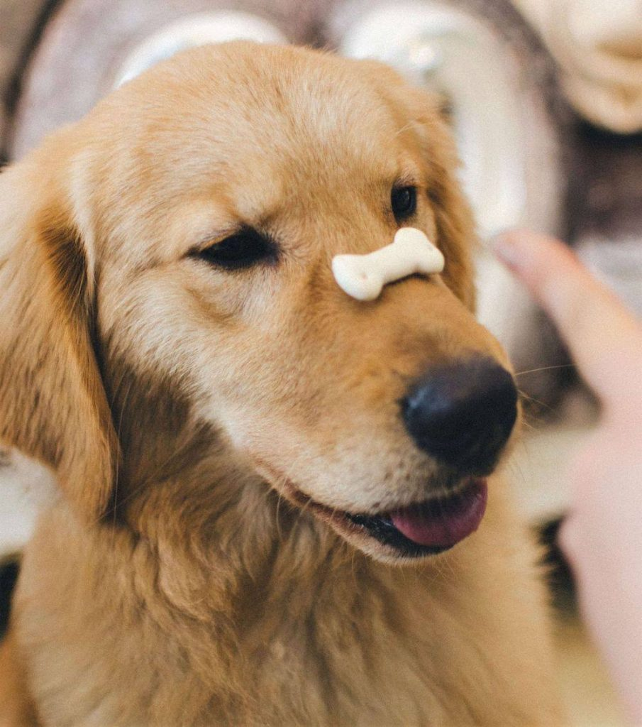 How to give cbd oil to dogs in dog treats
