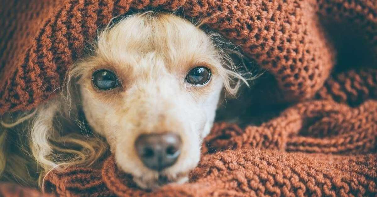 hemp oil for dogs pain
