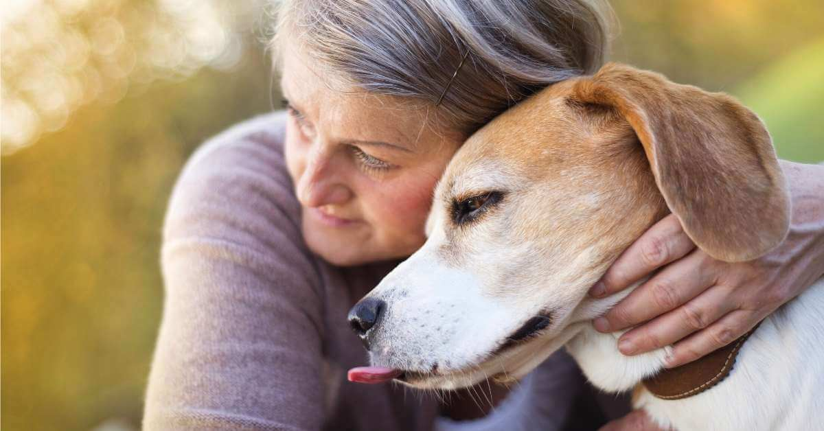 CBD oil for dogs with seizure disorders
