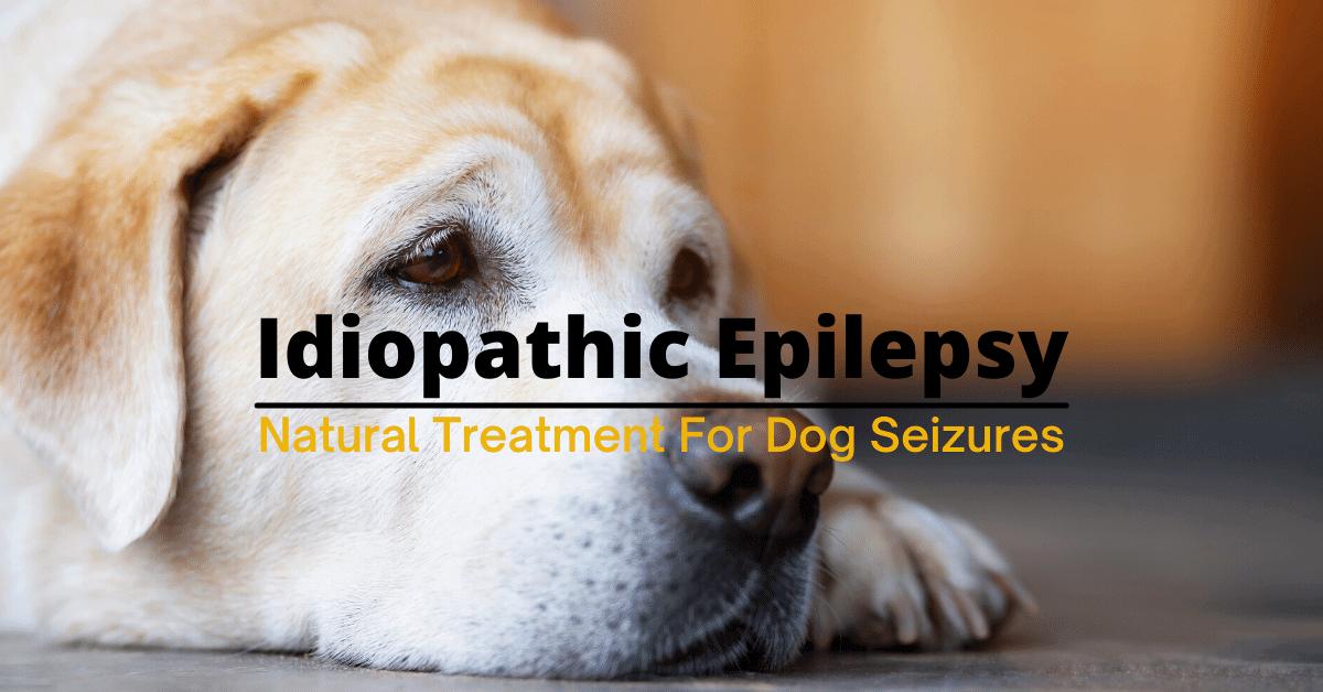 dog idiopathic epilepsy