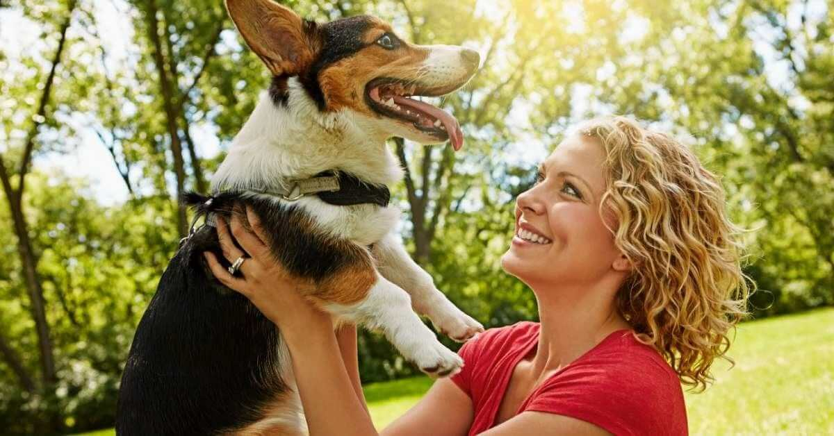 Cannabis for geriatric dogs