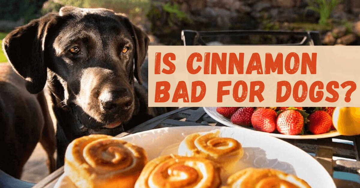Can Dogs Have Cinnamon?