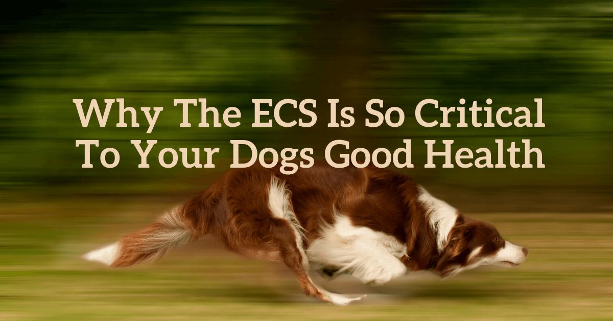ECS Dogs. Enodcannabinoid System in dogs
