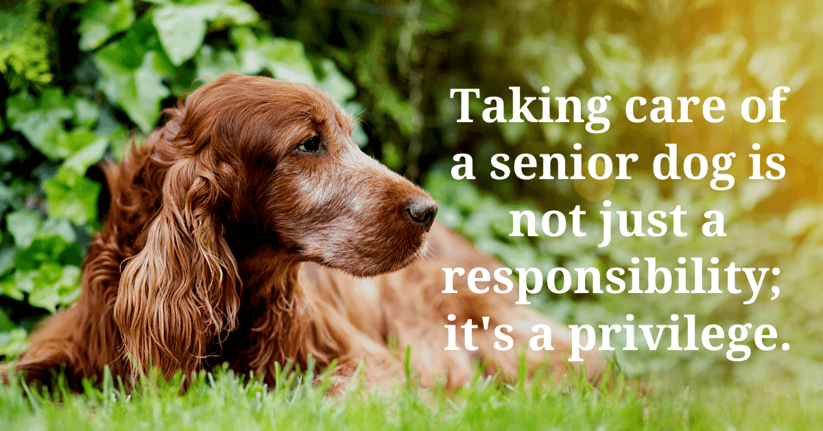 Senior dog care. How to care for a senior dog. Old dog seizures. Old dog not eating. Old dog syndrome. Special considerations for taking care of a geriatric dog.